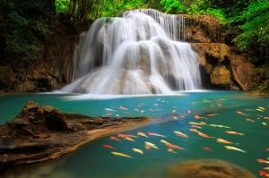 Orman İçinde Şelale Doğa Manzaraları Kanvas Tablo