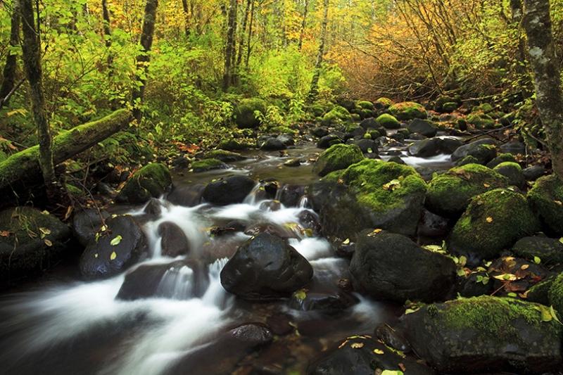Orman İçindeki Dere Manzarası Kanvas Tablo