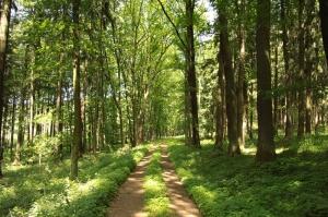 Orman Patika Yol Doğa Manzaraları Kanvas Tablo