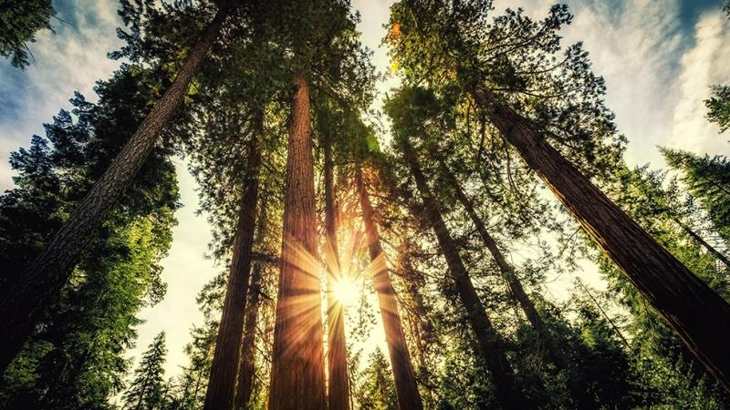 Orman ve Gün Işığı Doğa Manzaraları Kanvas Tablo