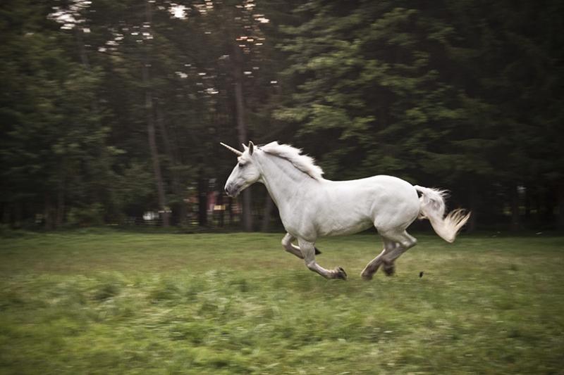 Ormanda Koşan Unicorn At Hayvanlar Kanvas Tablo