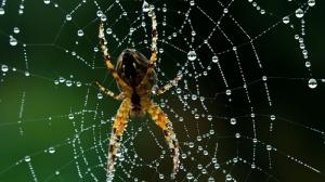 Örümcek ve Ağ Kanvas Tablo