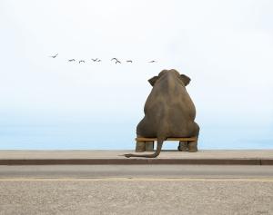 Oturan Fil Hayvanlar Kanvas Tablo