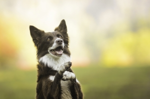 Oyuncu Köpek Hayvanlar Kanvas Tablo