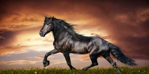 Özgür, Çılgın, Vahşi Atlar-2 Kanvas Tablo