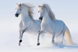 Özgür, Çılgın, Vahşi Atlar-3 Kanvas Tablo