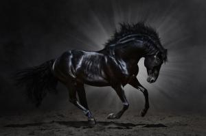 Özgür, Çılgın, Vahşi Atlar-4 Kanvas Tablo