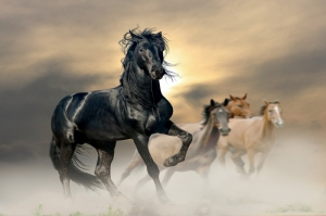 Özgür, Çılgın, Vahşi Atlar-5 Kanvas Tablo