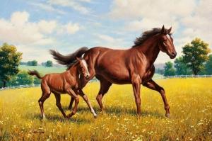 Özgür Çılgın Vahşi Atlar-6 Kanvas Tablo