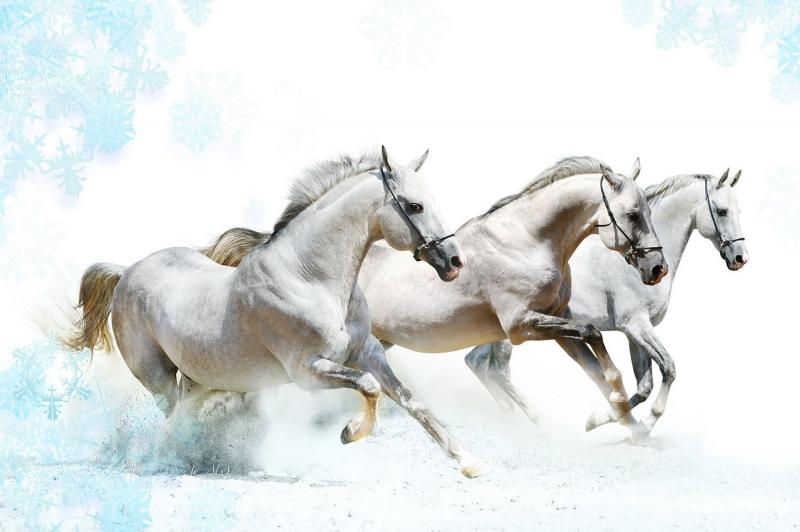 Özgür, Çılgın, Vahşi Atlar-7 Kanvas Tablo