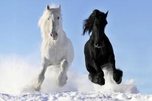 Özgür, Çılgın, Vahşi Atlar-9 Kanvas Tablo