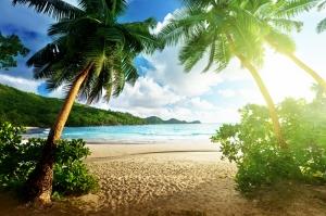 Palmiya Ağaçları ve Kumsal Manzarası Kanvas Tablo