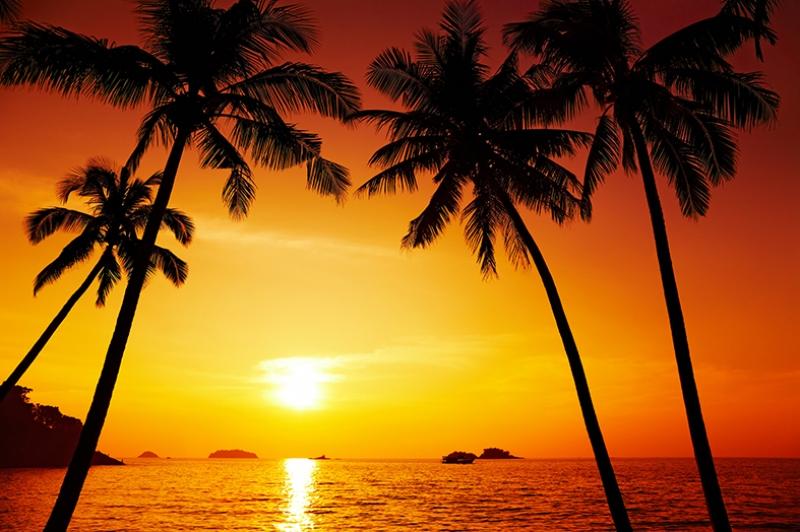 Palmiye Ağaçları ve Kumsal Manzarası Günbatımı Kanvas Tablo