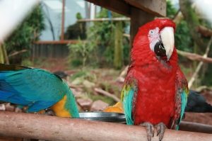 Papağan 2 Hayvanlar Kanvas Tablo