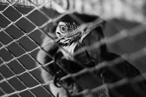 Papağan 5 Hayvanlar Kanvas Tablo