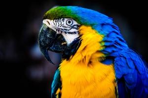 Papağan Hayvanlar Kanvas Tablo