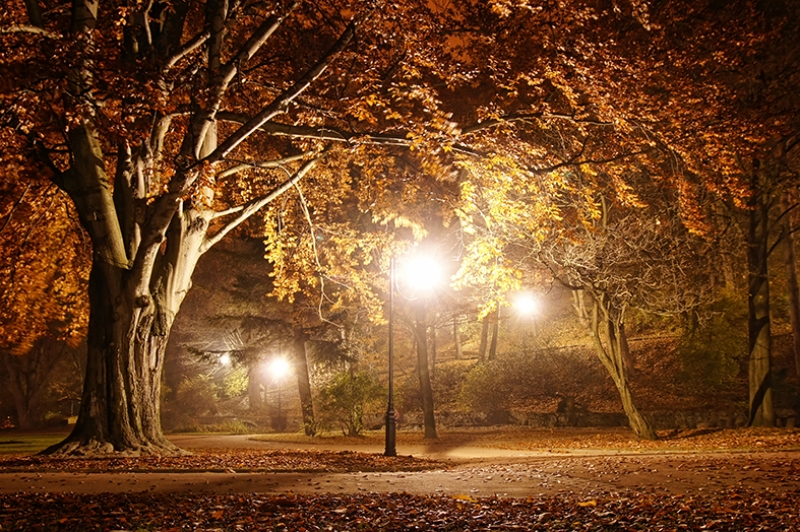 Park Gece Yarısı Manzaralı Kanvas Tablo