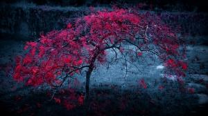 Pembe Ağaç Doğa Manzaraları Kanvas Tablo