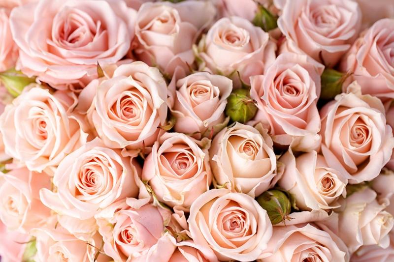 Pembe Güller Doğa Manzaraları Kanvas Tablo