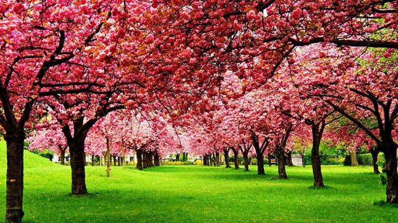 Pembe Yapraklar ve Yeşillik Kanvas Tablo