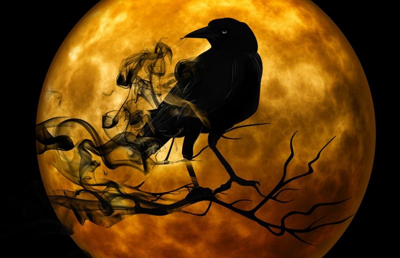 Raven Fotoğraf Kanvas Tablo