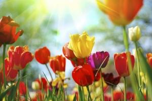 Rengarenk Güller Floral Kanvas Tablo