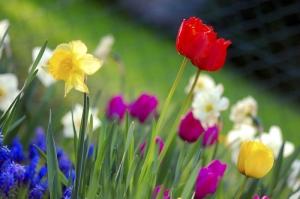 Rengarenk İlkbahar Çiçekleri Kanvas Tablo