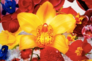 Rengarenk Orkide 2 Yağlı Boya Dekoratif Kanvas Tablo