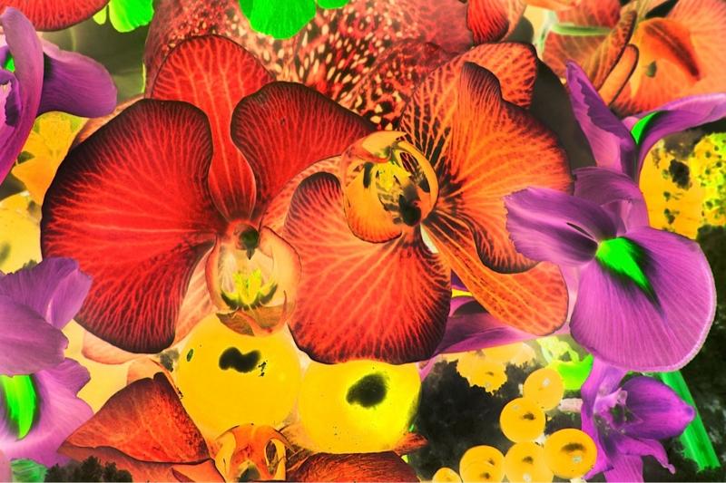 Rengarenk Orkide 6 Yağlı Boya Dekoratif Kanvas Tablo