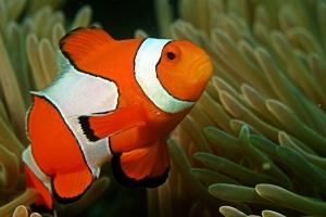 Renkli Balık Hayvanlar Kanvas Tablo