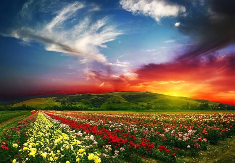 Renkli Doğa Manzaraları Kanvas Tablo