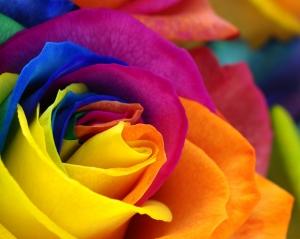 Renkli Gül Fotoğraf Kanvas Tablo