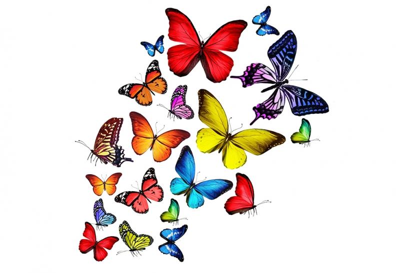 Renkli Kelebekler Doğa Manzaraları Kanvas Tablo