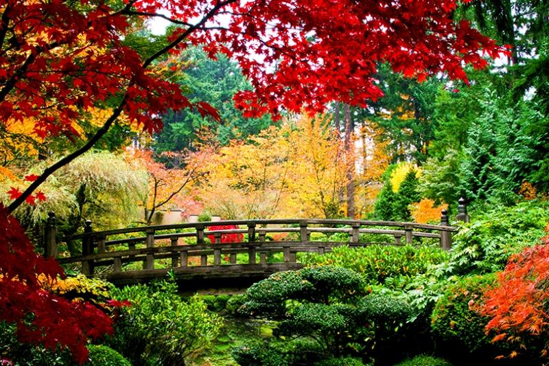 Renkli Orman ve Tahta Köprü Kanvas Tablo