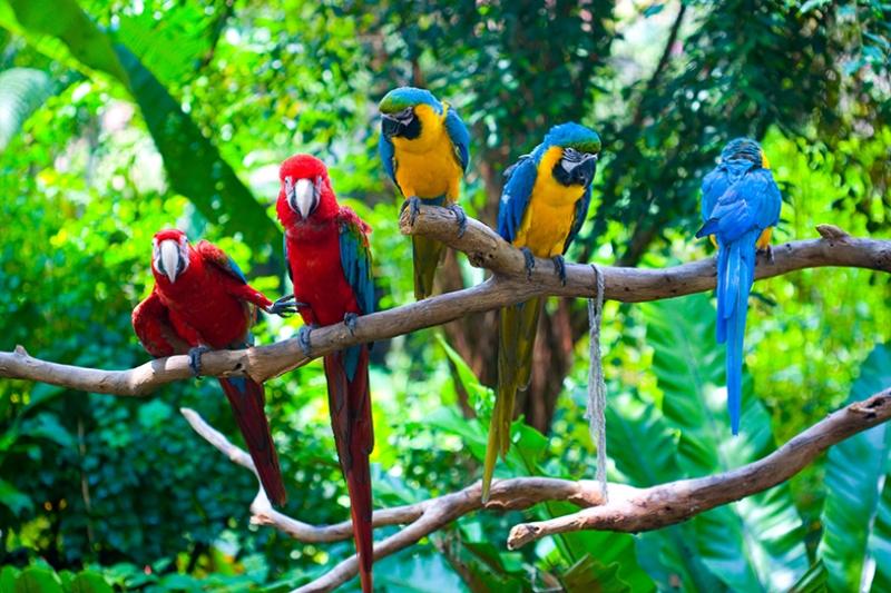 Renkli Papağanlar Tropikal Kanvas Tablo