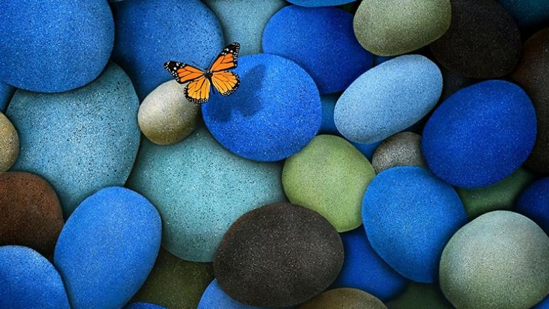 Renkli Taşlar ve Kelebek Fotoğraf Kanvas Tablo