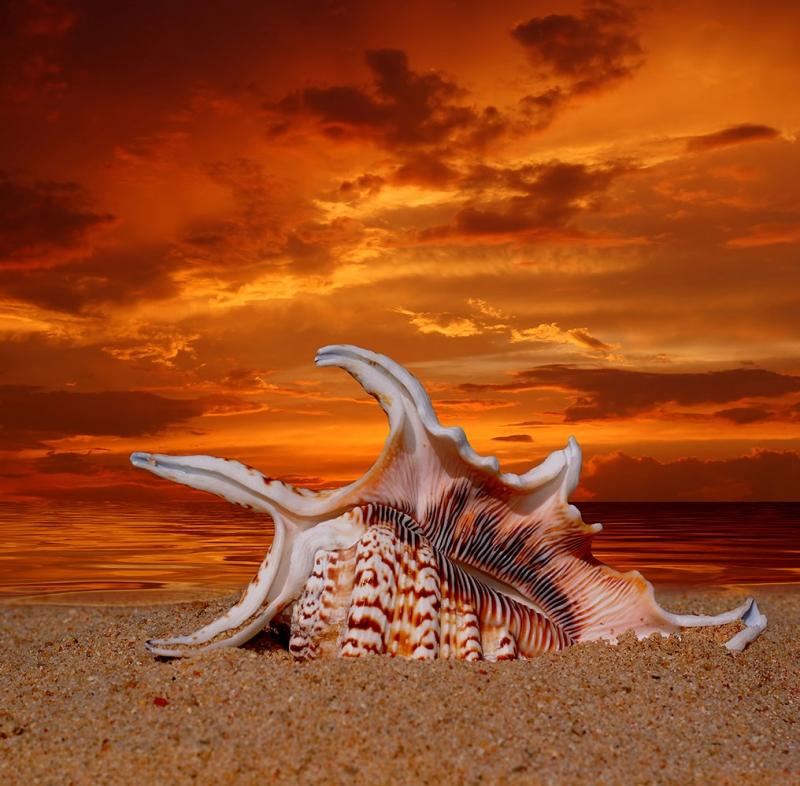 Sahil Deniz Kumsal 5 Deniz Kabuğu Doğa Manzaraları Kanvas Tablo