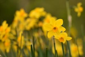 Sarı Çiçek Doğa Manzaraları Kanvas Tablo