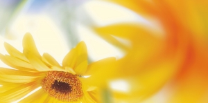 Sarı Çiçek Floral Kanvas Tablo