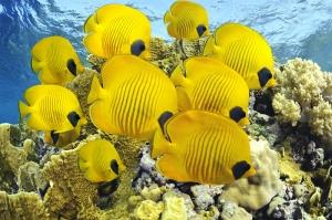 Sarı Okyanus Balıkları Doğa Manzaraları Kanvas Tablo