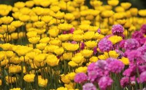Sarı ve Mor Çiçekler Doğa Manzarası Kanvas Tablo