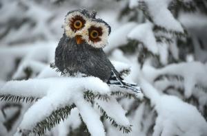 Sevimli Baykuş Hayvanlar Kanvas Tablo