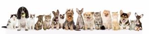 Sevimli Kediler ve Köpekler Panaroma Panaromik Kanvas Tablo