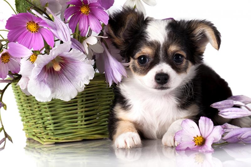 Sevimli Köpek ve Çiçek Hayvanlar Kanvas Tablo