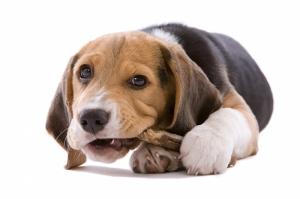 Sevimli Köpek Yavrusu 2 Hayvanlar Kanvas Tablo