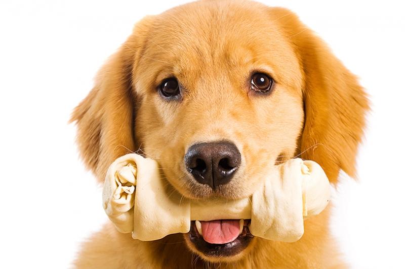 Sevimli Köpek Yavrusu Hayvanlar Kanvas Tablo