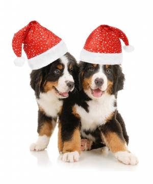 Sevimli Köpekler Yılbaşı Partisi Kanvas Tablo