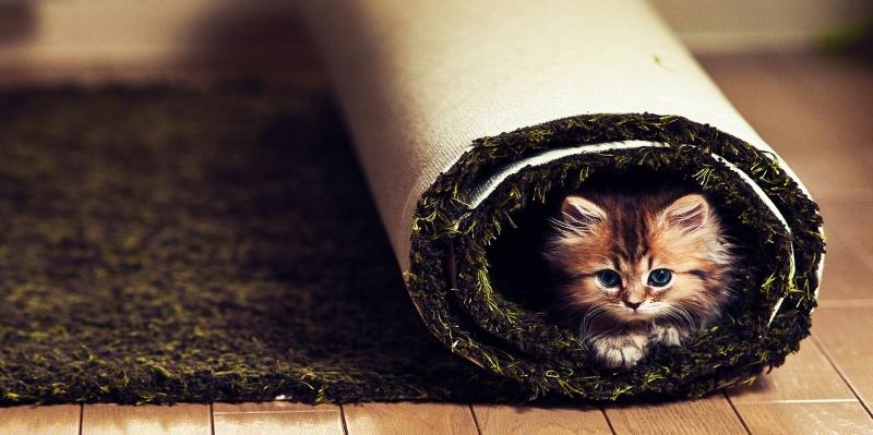 Sevimli Minik Hayvanlar-10 Kanvas Tablo