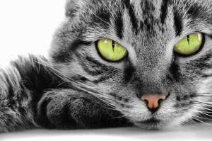 Sevimli Minik Hayvanlar-2 Kanvas Tablo