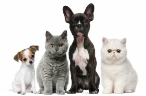Sevimli Minik Hayvanlar-5 Kanvas Tablo